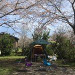 お花見キャンプ 千葉イレブンオートキャンプパーク 関東の中で圧巻の桜