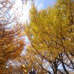 昭和記念公園の黄葉・紅葉まつりに行ってきた!2017年11月