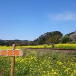 千葉県「石神名所 なの花畑」春のおでかけにぴったり♪