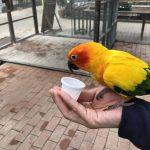 ミミズク・フクロウとふれあえる!富士花鳥園を満喫してきた!