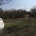 朝霧ジャンボリーオートキャンプ場の全貌 各サイトの景色の紹介
